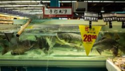 Photo: fresh fish in fish counter