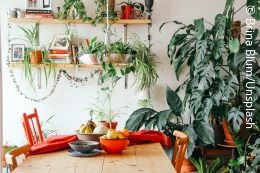 A dining table made of wood and on it and behind it many plants; copyright: Brina Blum / Unsplash